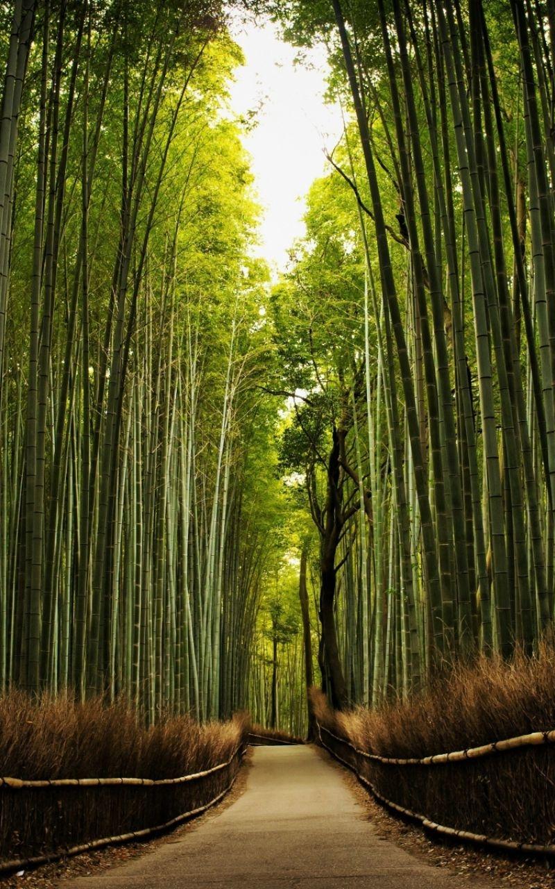 高雅的竹子風景壁紙