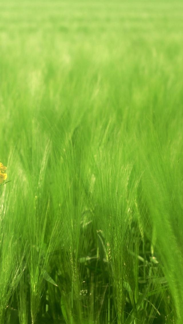 [图片]绿色护眼手机壁纸|手机绿色护眼壁纸|电脑显示