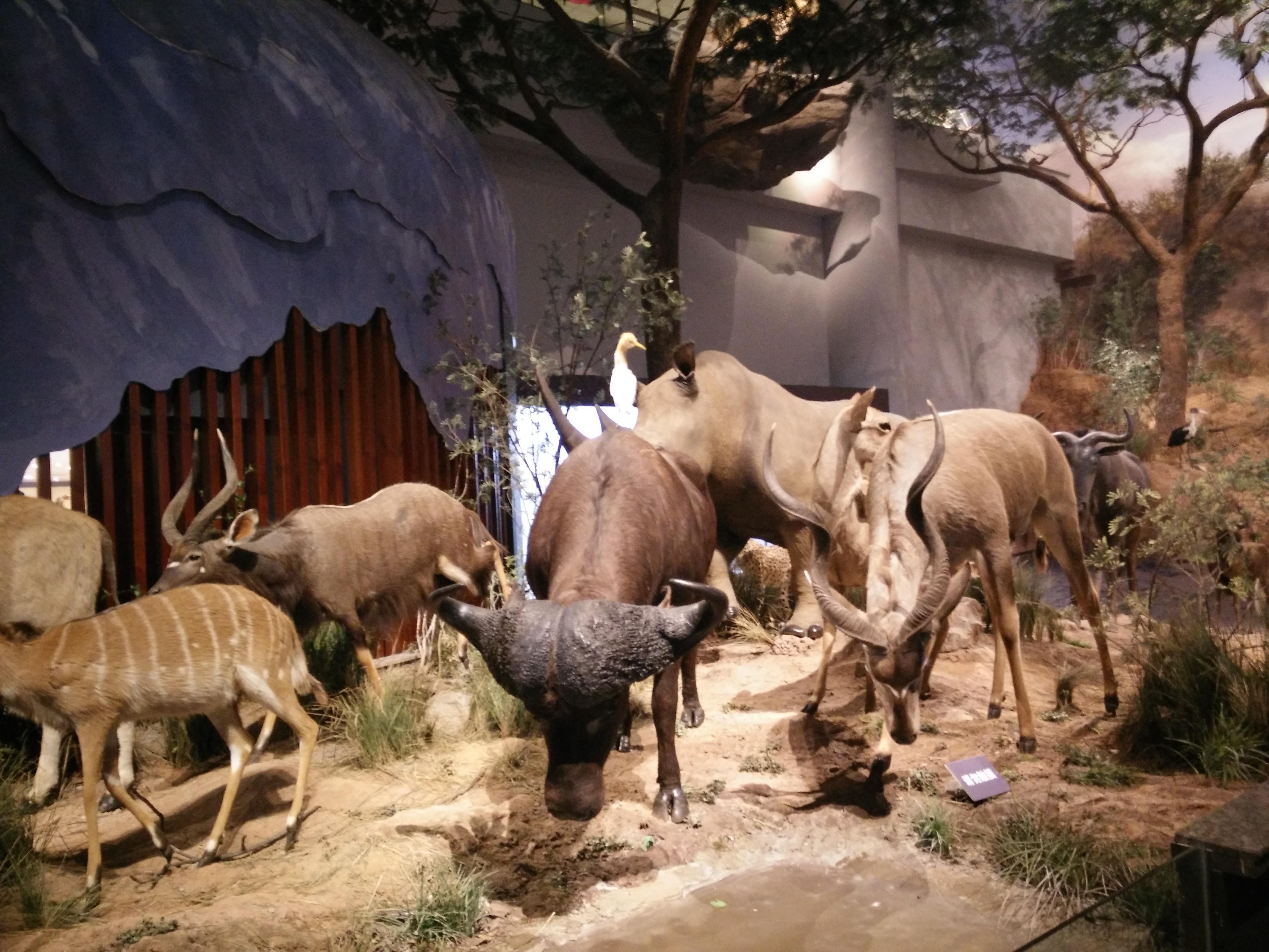 非洲动物迁徙展二