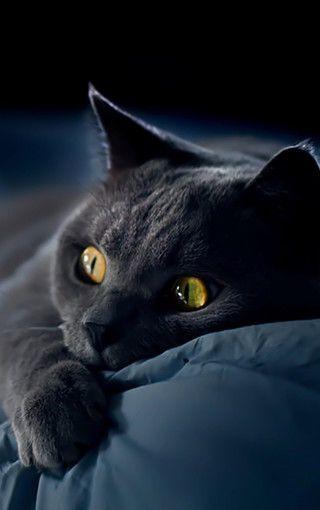 【动物壁纸】黑色猫咪可爱高清手机壁纸