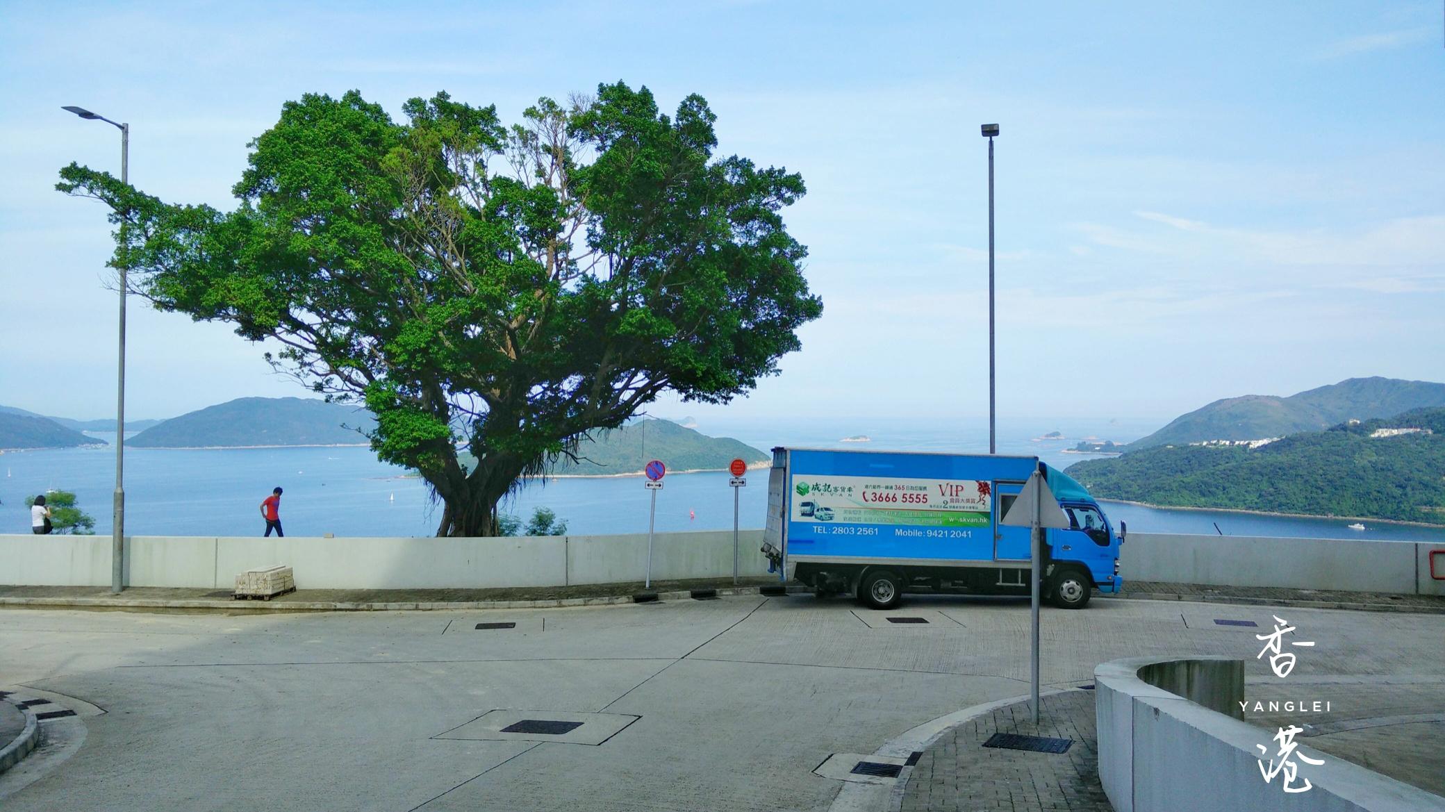 香港科技大学海边的车和树