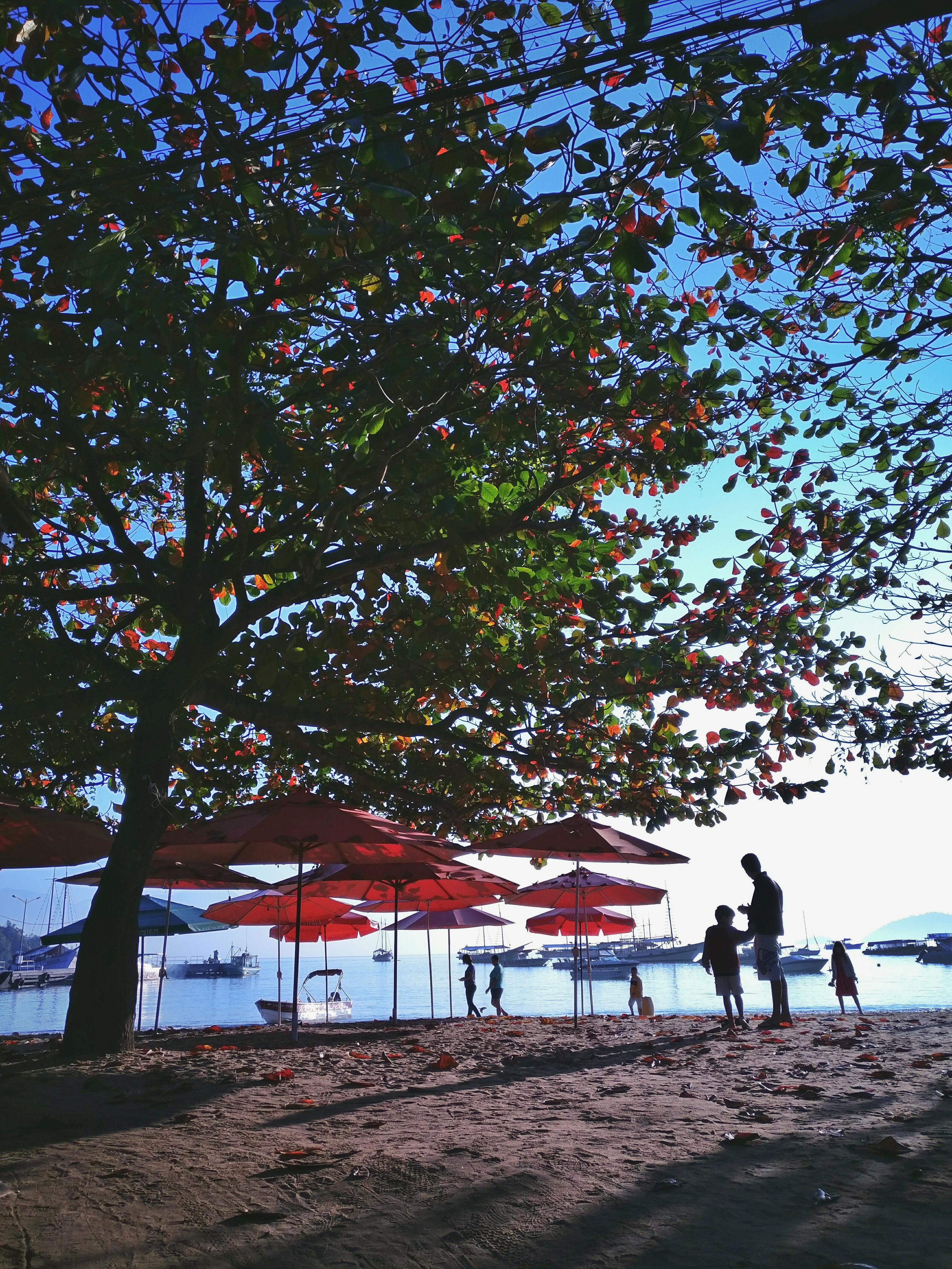 Green-tree---OnePlus3---ilha-grande.jpg