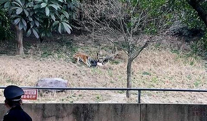 今天下午2点半左右,宁波雅戈尔动物园发生老虎咬人事件。   下午14:40分,网友凌乐乖发了一条微博,微博写着,雅戈尔动物园老虎山中有一男子,隔着河岸可以看到老虎撕咬男子。   网友kiki986发消息说,抱着孩子赶紧跑回家,老公还在那儿摄像,画面太血腥。   钱江晚报记者联系上@凌乐乖,他说自己是闻声过去的,到时工作人员已经在了。具体男子是什么身份,怎么隔着河过去,他也不清楚。   对此,动物园办公室负责人表示,他刚刚赶到动物园,事情具体情况稍后通报。   网友发布了一些图片: