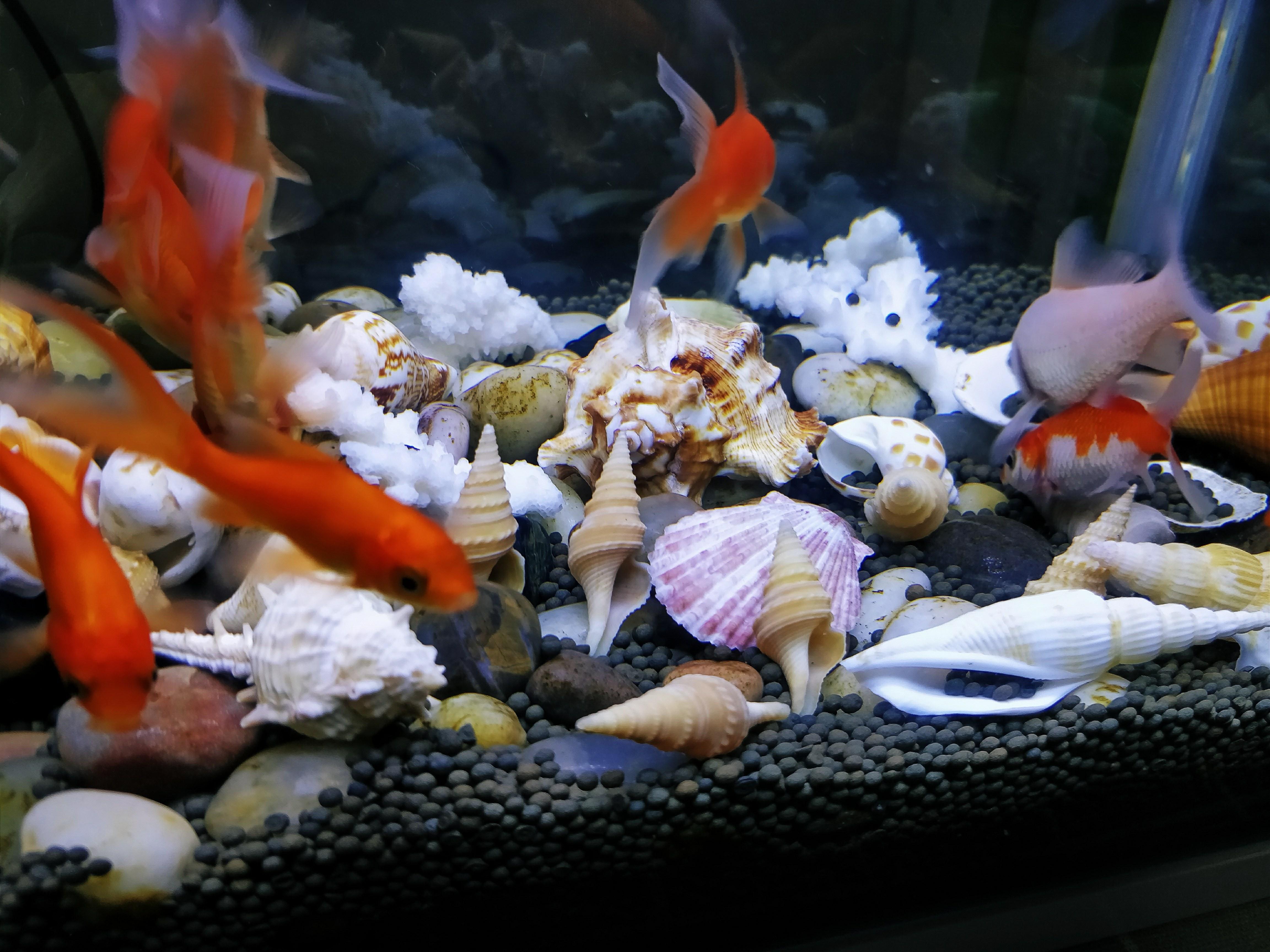 桌上海底世界