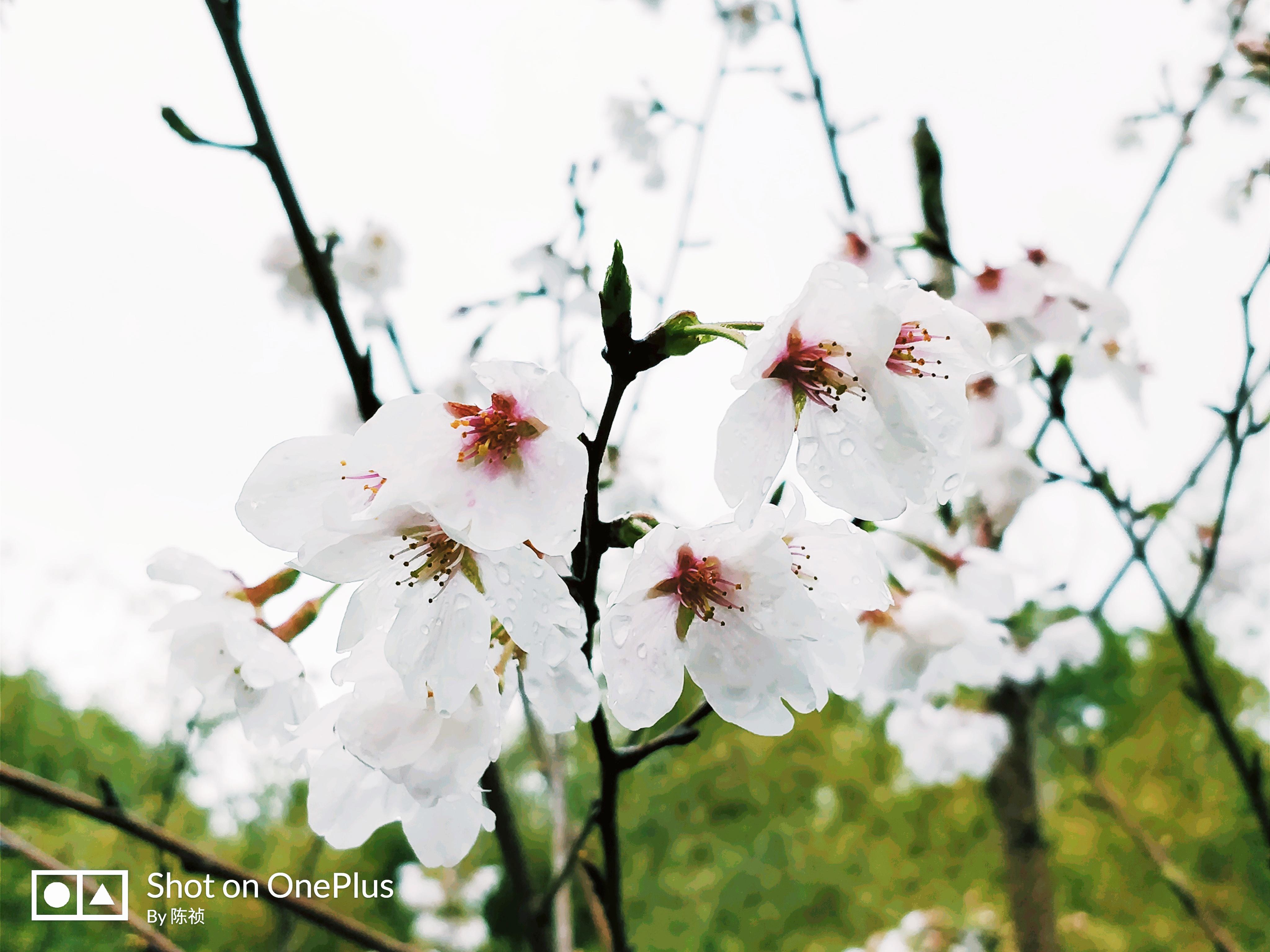 拍春.jpg