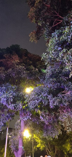 灯光下的树
