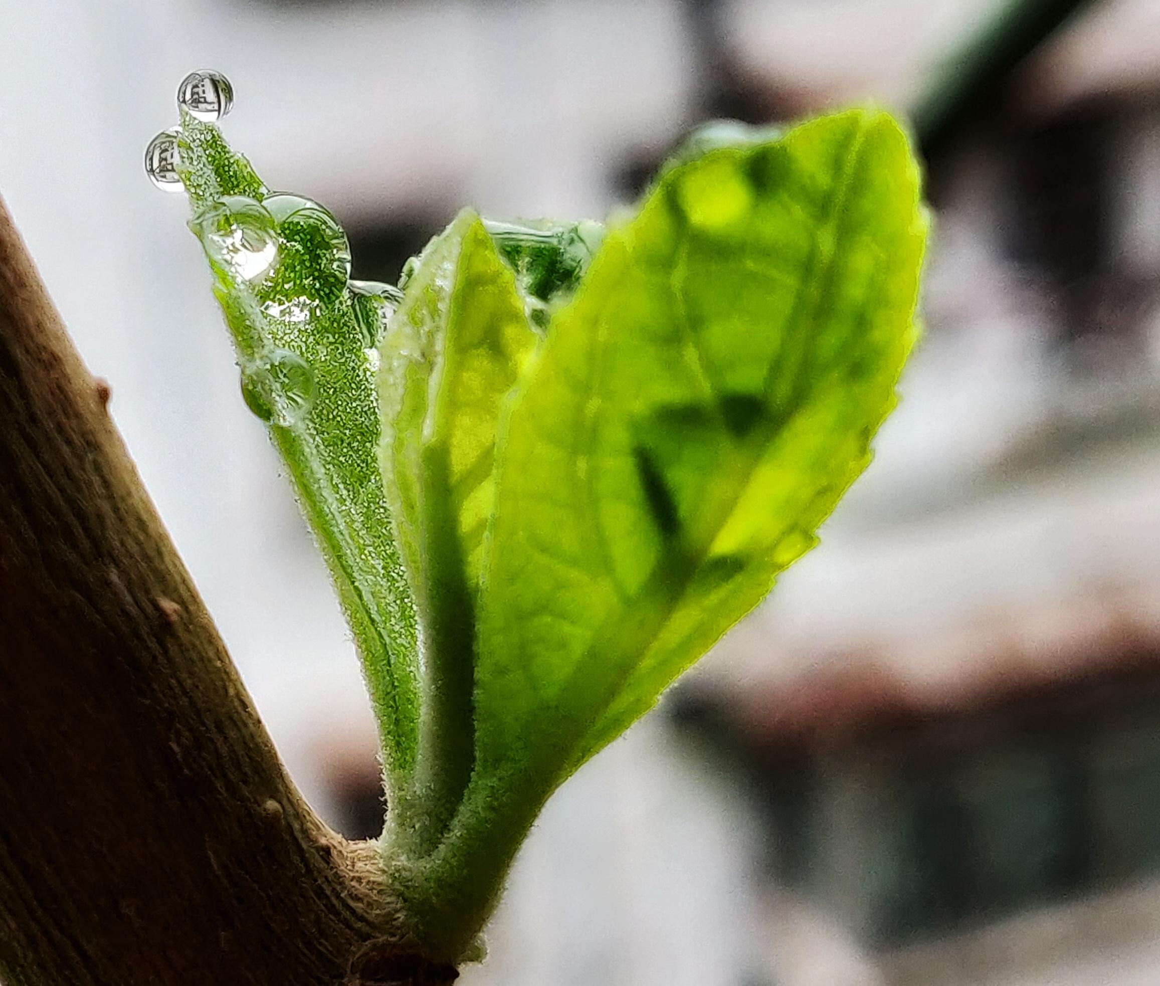 春-02.jpg