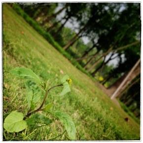 虫儿,花儿,草儿的世界!