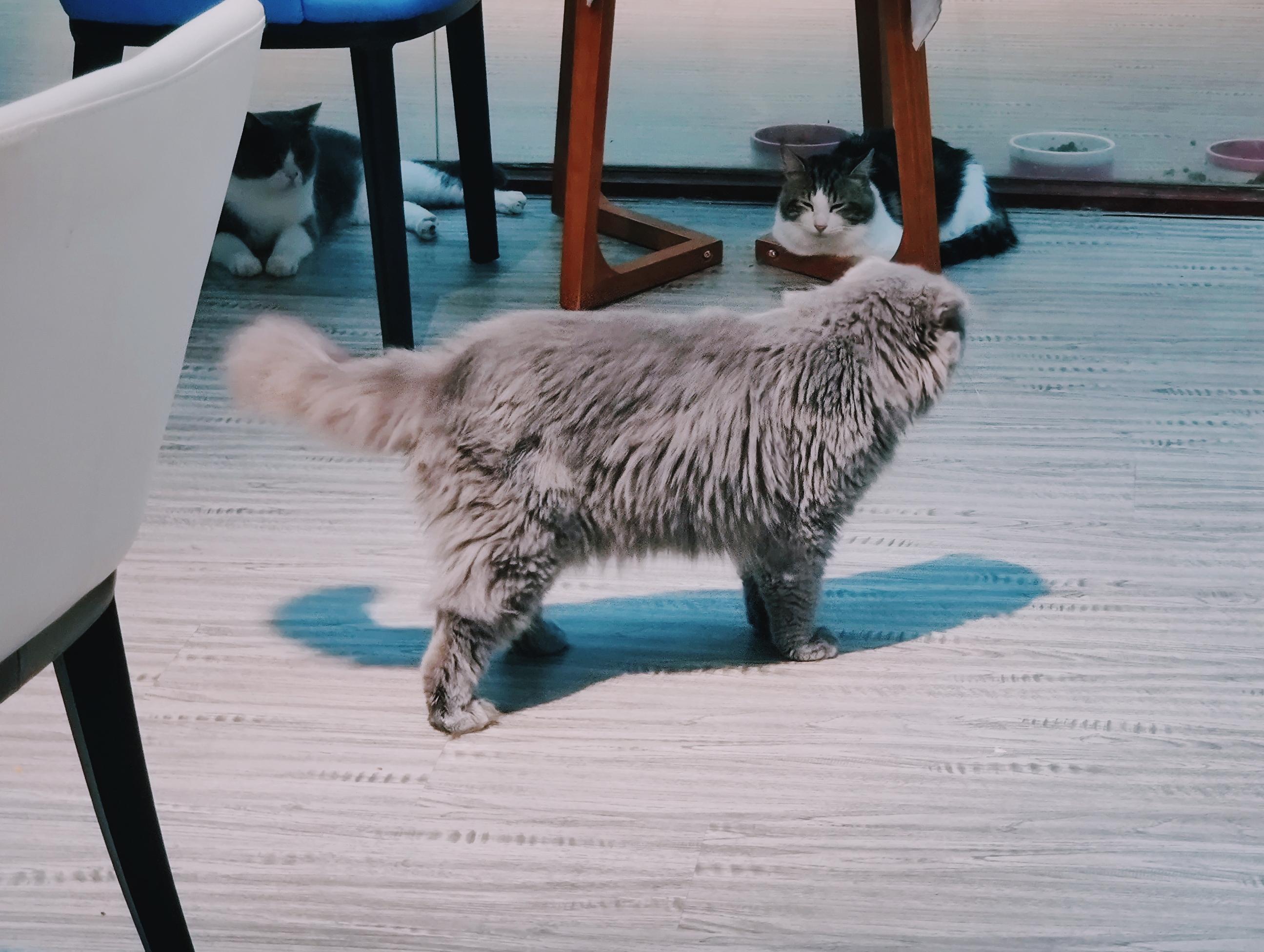 吸猫1970-01-01 08.00.00 35(1).jpg