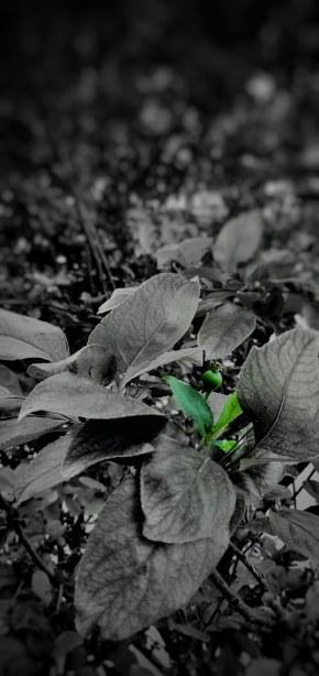 绝境中的一丝绿色