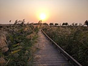 【秋日夕阳】卧龙湖湿地夕阳美景