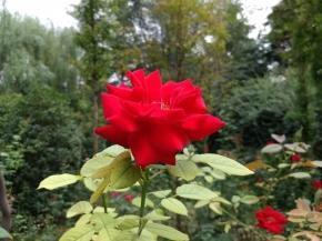 黄河浏览区的花花草草