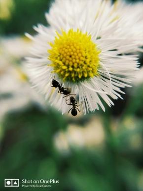两只小蚂蚁