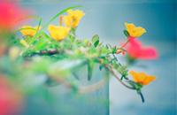 路边小花也如此美丽