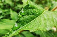 雨后,拍些花花草草