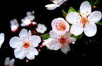 2016记春※花