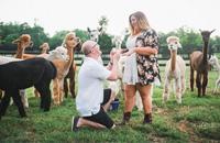男子求婚 神兽抢镜