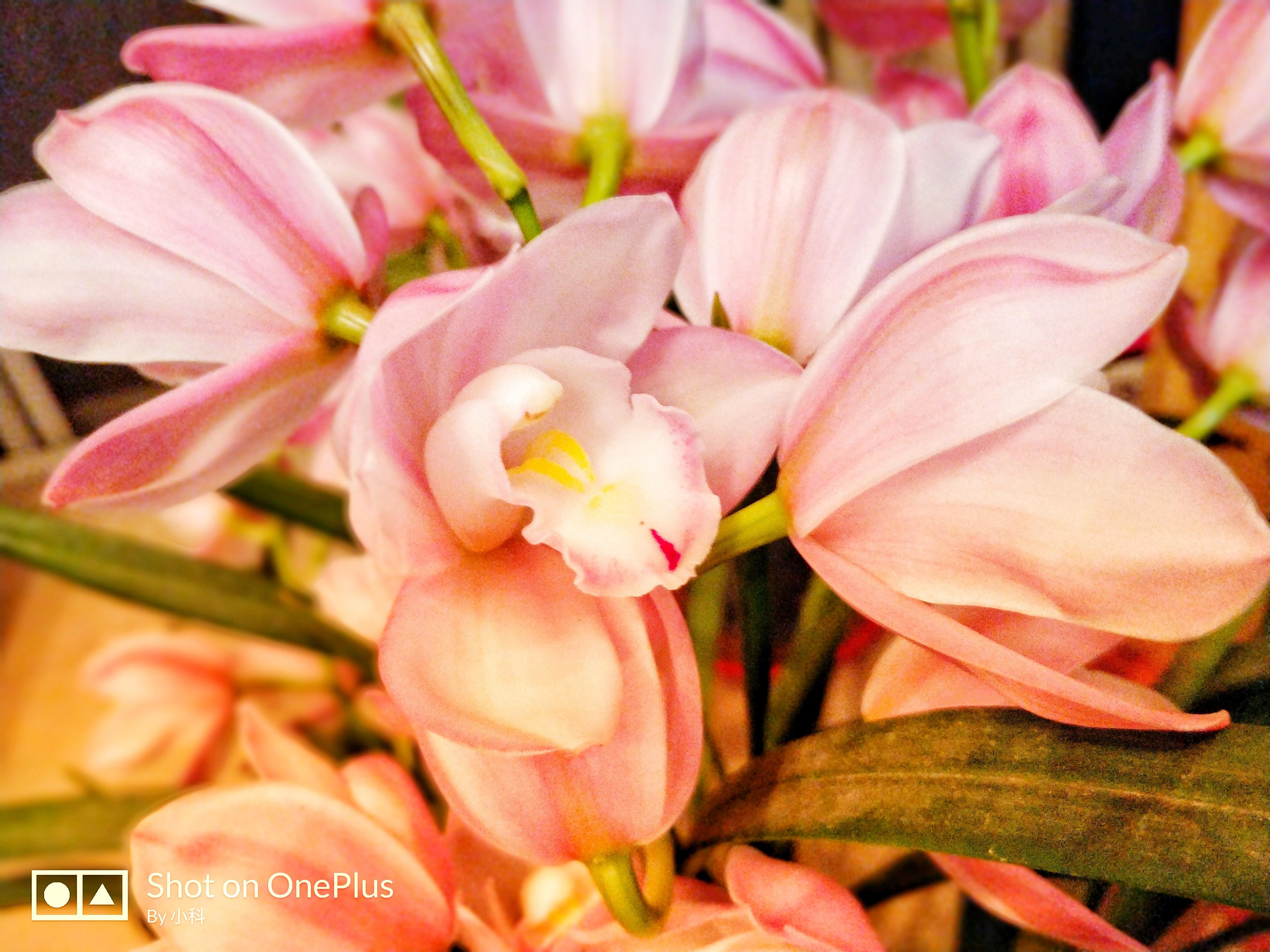 梦见家里鲜花正在开放 梦见各种鲜花盛开