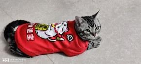 猫大佬再次向恶势力低头