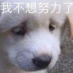 安逸帅11.png