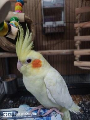 新來的鸚鵡