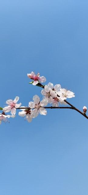 春天來了呀