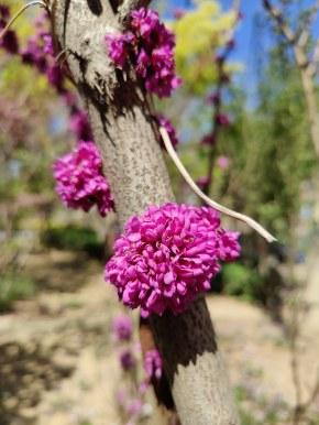 这是什么花,居然直接长在树干上