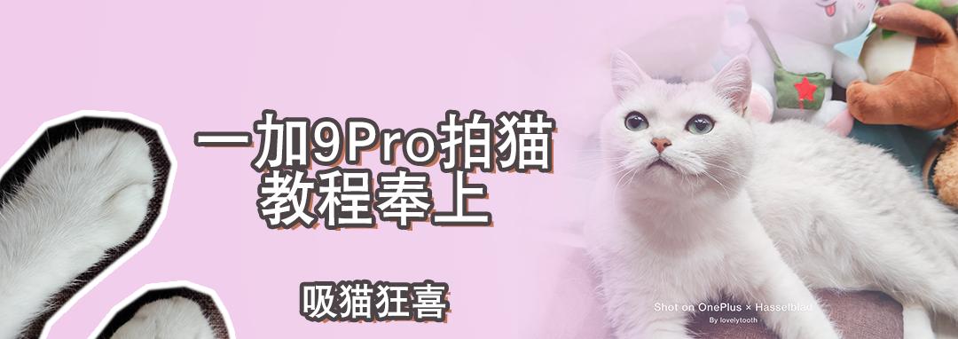 拍猫教程封面.png