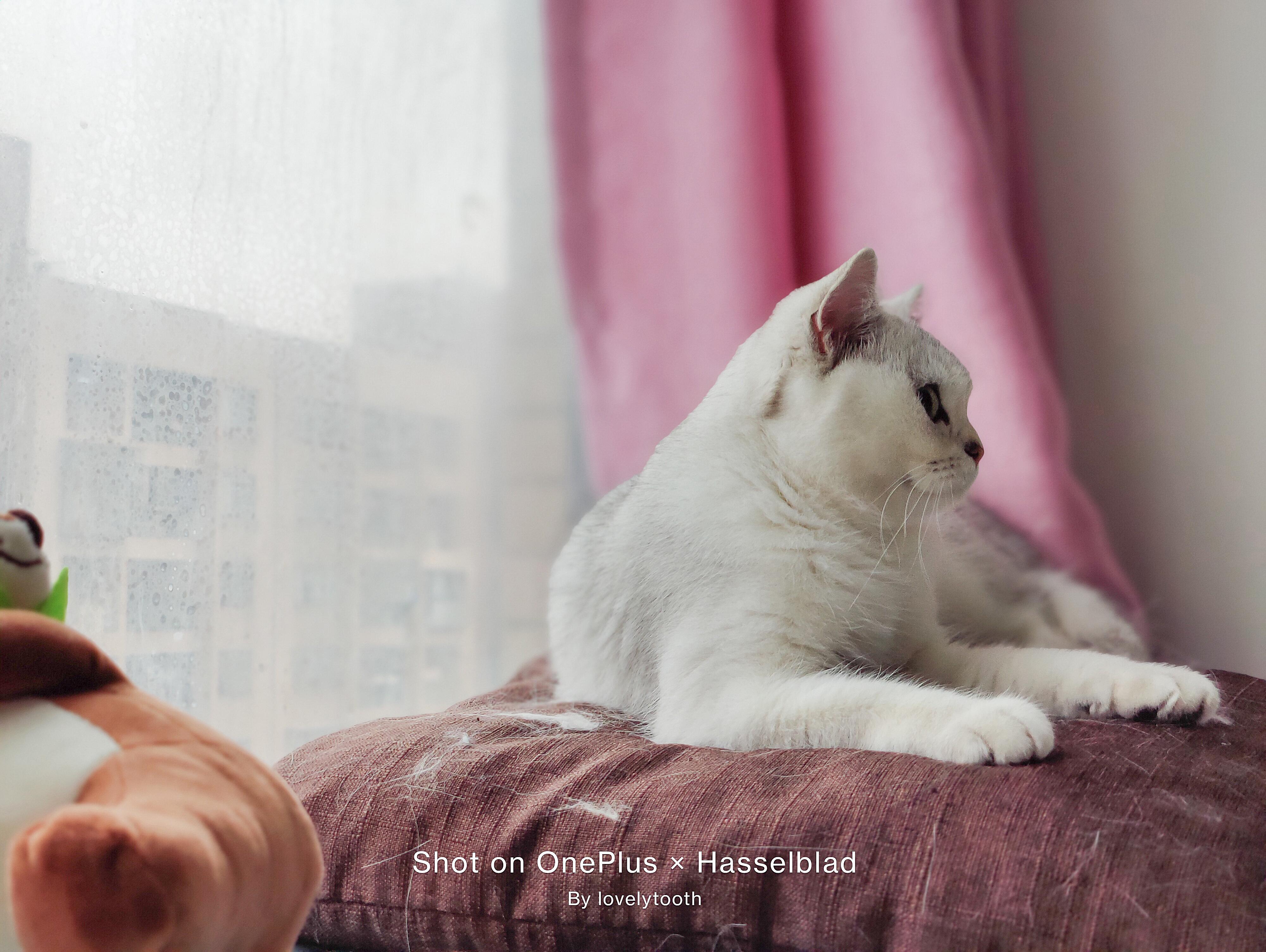 OnePlus9系列拍猫-3.jpg