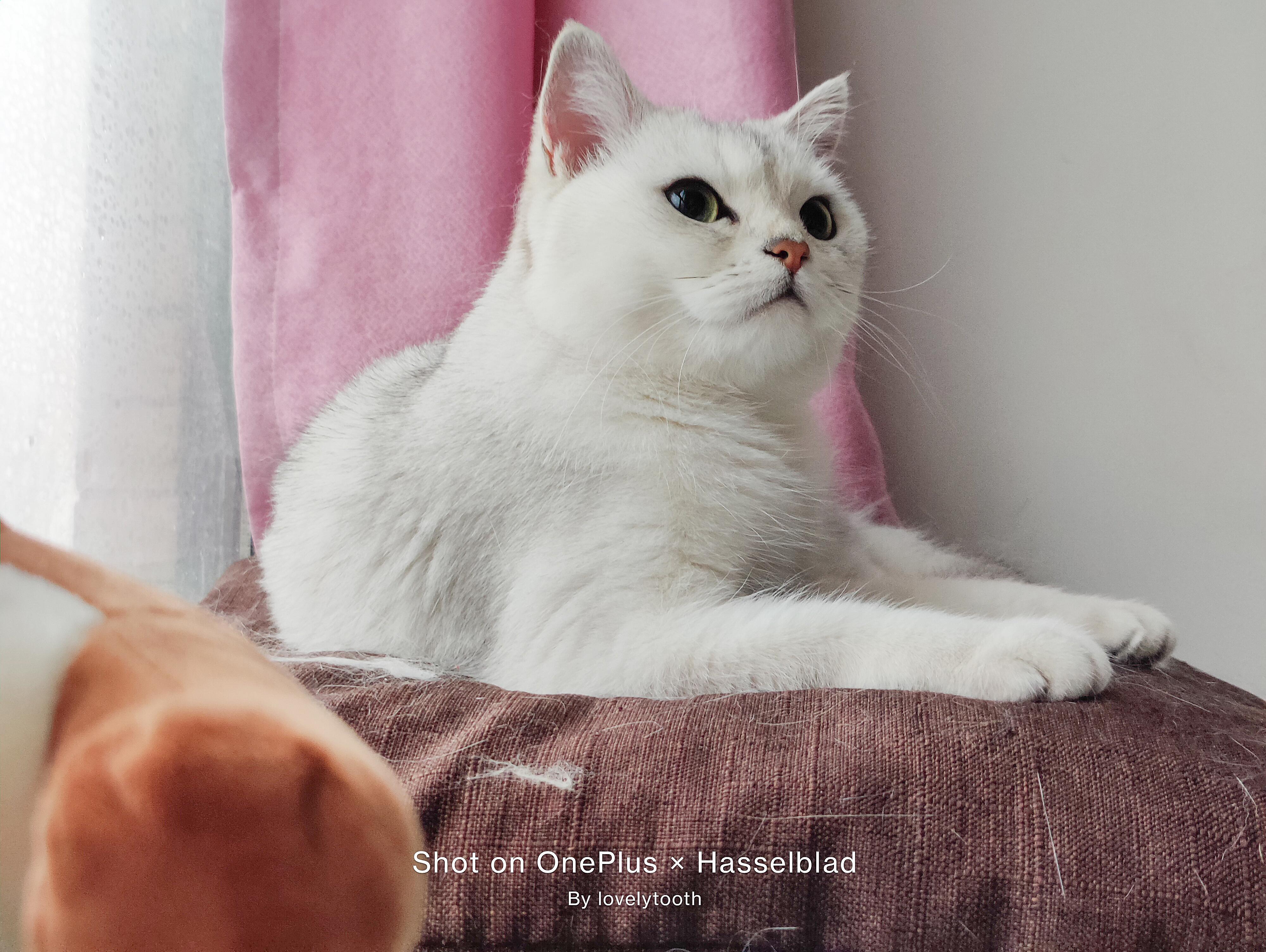 OnePlus9系列拍猫-4.jpg