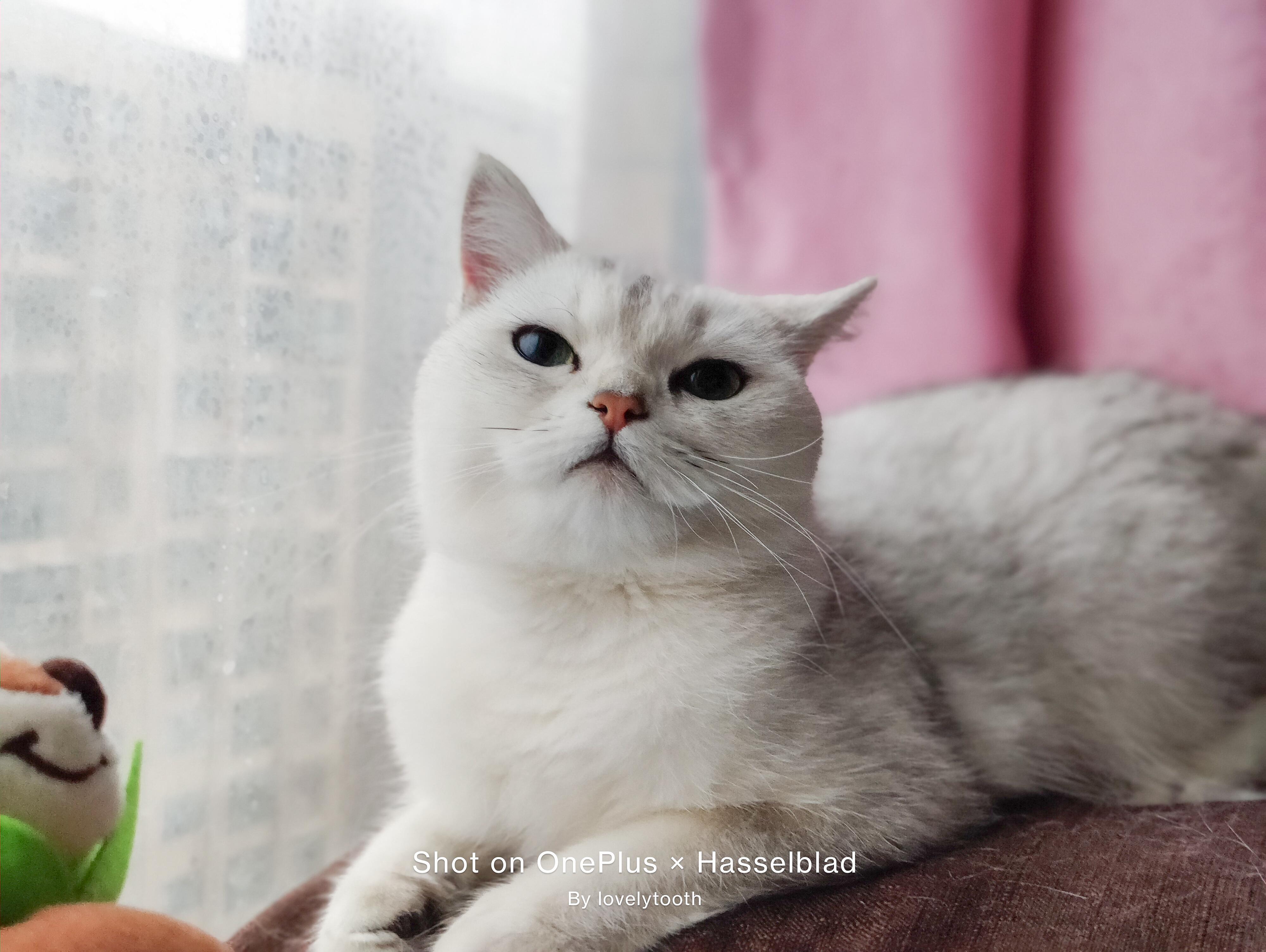 OnePlus9系列拍猫-2.jpg